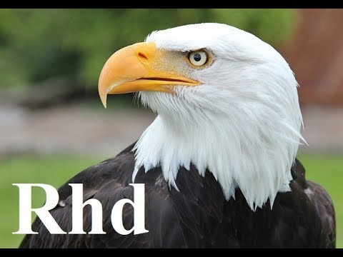 Eagle, Falcon, Owl - Birds Of Prey,  Nature 2018 HD Documentary.