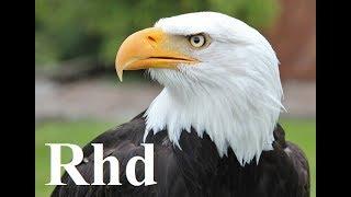 Eagle, Falcon, Owl - Birds Of Prey,  Nature 2018 HD Documentary.