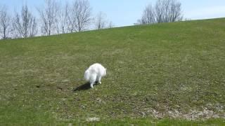 がんばって坂をのぼるなな 途中で転んで転がり落ちてしまうんだけど こ...