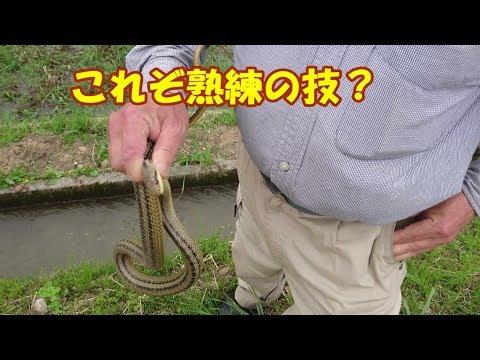 散歩がてらのヘビ探し