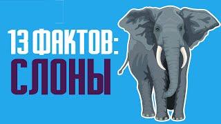 13 интересных фактов о слонах: особенности, умения и жизнь животных