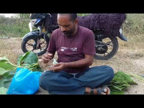 Entire Quail Bird Cooking In Underground Soil/How To Cook Bird?/Bird  Curry Prepared By My Daddy
