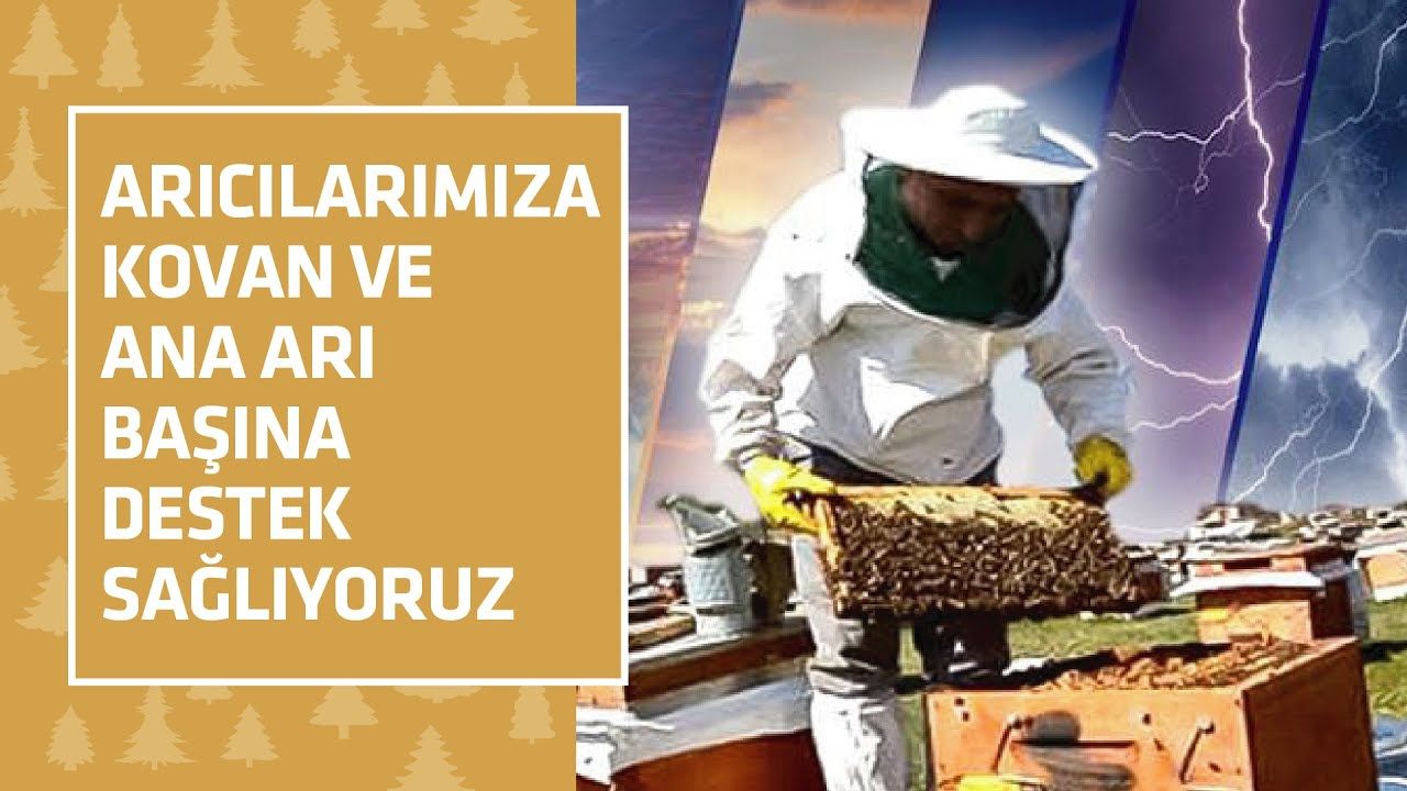 Arıcılara, Ana arı başına 80 LİRA Destek !