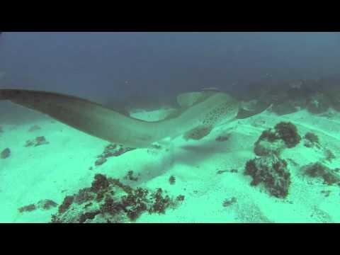 Scuba diving at julian rocks byron bay nsw feb 2012 - Dive byron bay ...