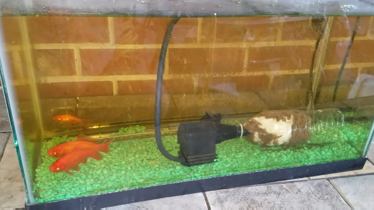 Diy Water Bottle Filter Insanely Fast Easy Clean Your Fish Tank Or Aquarium Keep It Clean Youtube