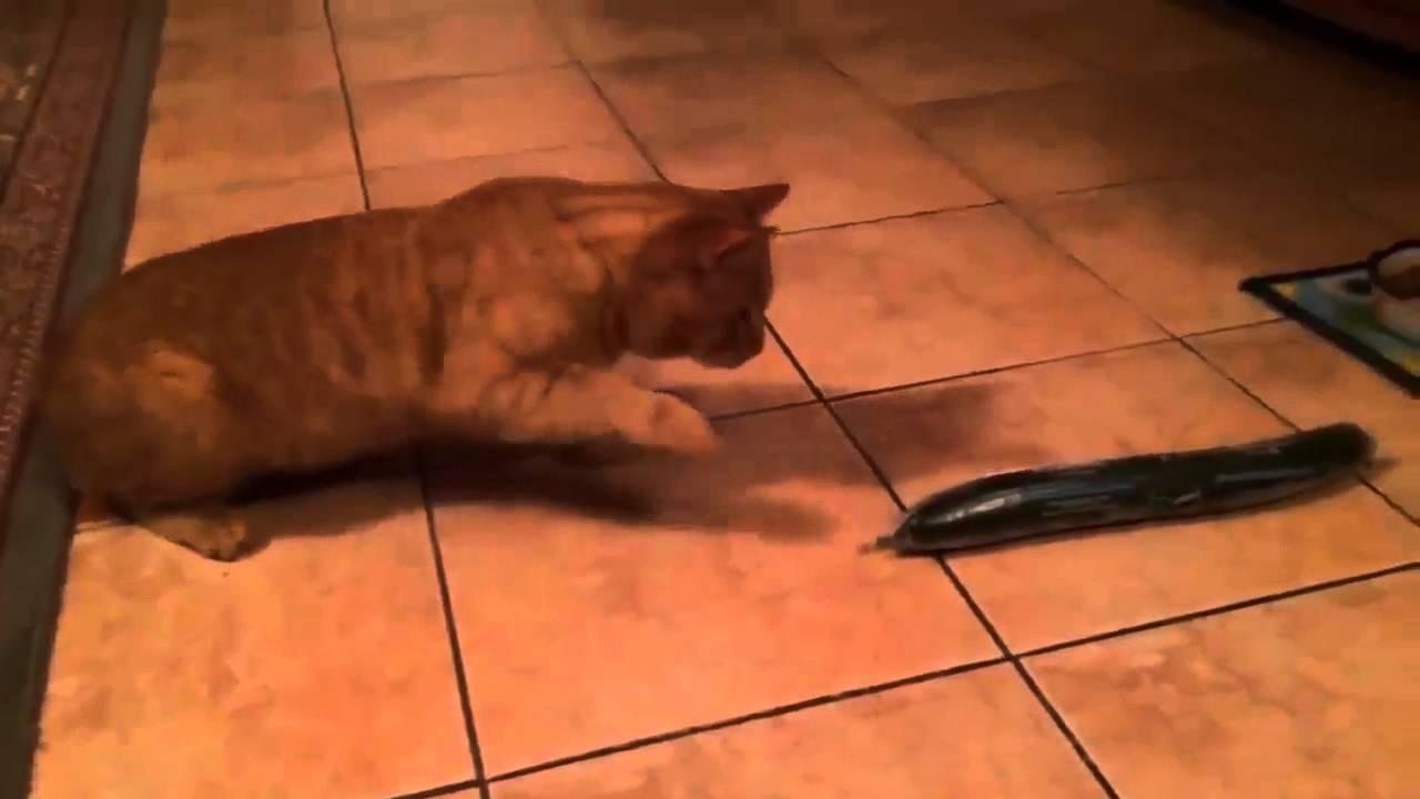 cat declaw cost