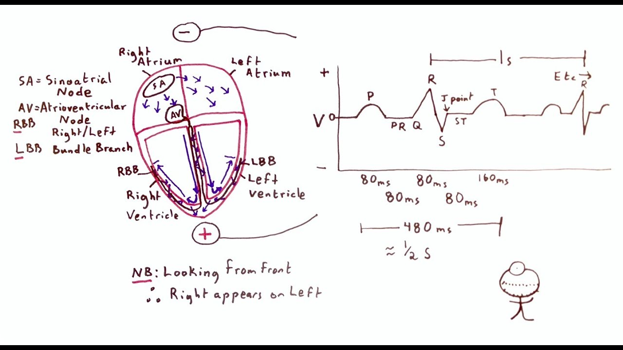 Diagram Of Heart Electrical Conduction Fileelectric Bicycle Diagramjpg Wikimedia Commons Cardiac And The Ecg One Minute Medical