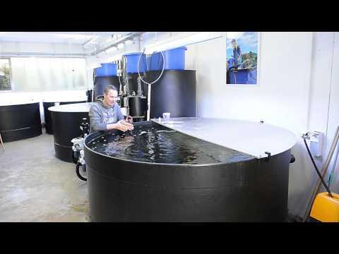 Modern koi blog 355 ber milchs urebakterien und fil for Salz gegen algen gartenteich