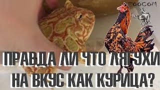 Еще о рогатках. И правда ли то, что лягушки на вкус как курица?