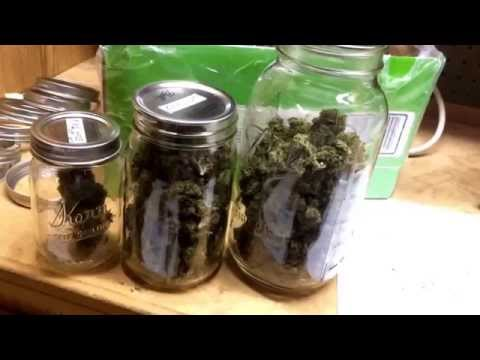 100% Organic Cannabis Harvest