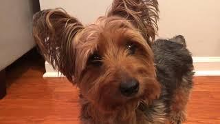 ASMR Dog's Response