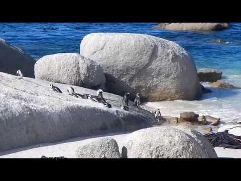 Travel Video - Cape Town, South Africa Roadtrip - Henriette Bokslag