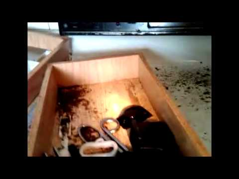 How Do German Roaches Get So Out Of Control