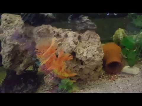 Akvaryum balık dans