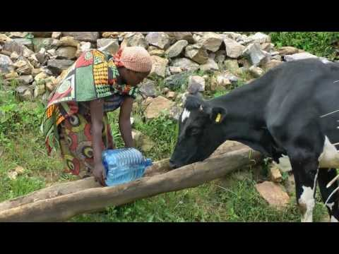 Milk for Transformation - Burundi