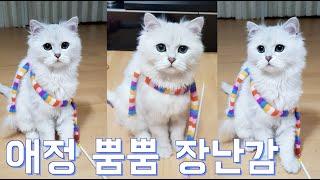 [sky house]고양이 인생 장난감을 드디어 만나다…
