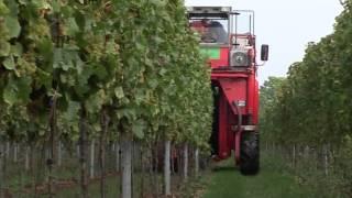TraktorTV Folge 30 - Die Weinernte
