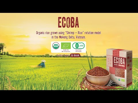 ecoba-organic-rice---as-nature-intended
