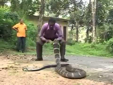 К чему снится, когда кусает змея?