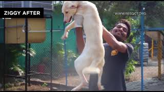 Journey of a rescued dog from hurt to healed.
