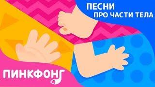 Части тела | Песни про Части Тела | Пинкфонг Песни для Детей