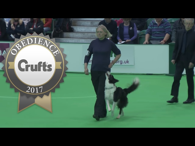 Obedience Championship - Bitches - Part 17 | Crufts 2017
