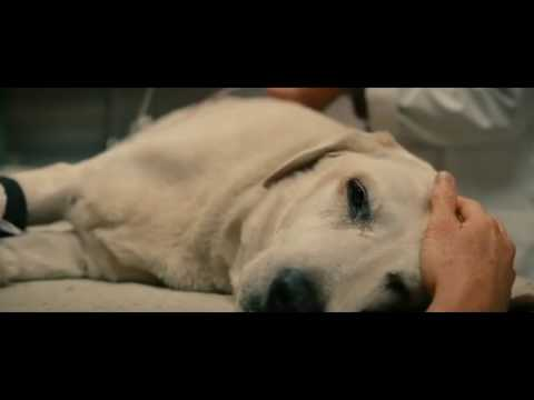 Marley and me ending