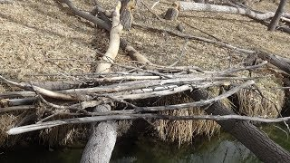 State Park City Squatch watch