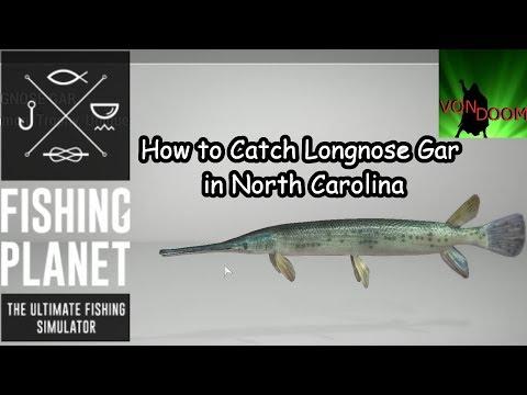 Fishing Planet: How-to Catch Longnose Gar In North Carolina