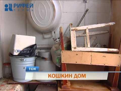В Перми одинокие пенсионерки приютили в своих квартирах десятки кошек