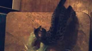 Как отучить кошку лазить по столам))