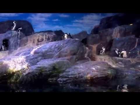 Penguins at sea life Bangkok Ocean World
