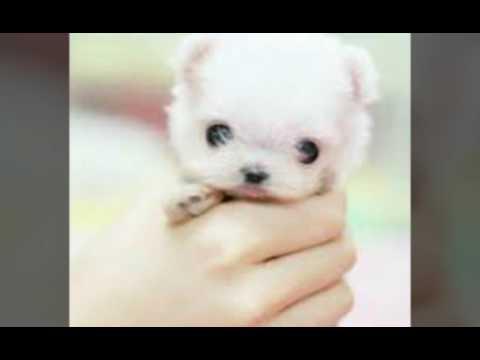 маленькие щеночки фото