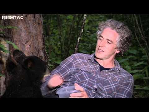 Gordon Buchanan Helps Abandoned Bear Cub  The Bear Family and Me  BBC Two