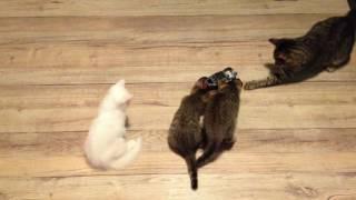 Котята и радиоуправляемые машинки