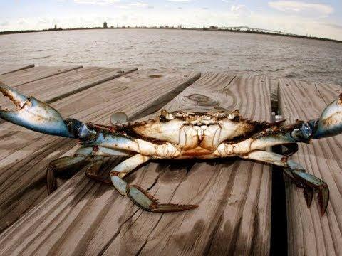 2019 Best Crabbing & Shrimping | Creole Nature Trail | Lake Charles