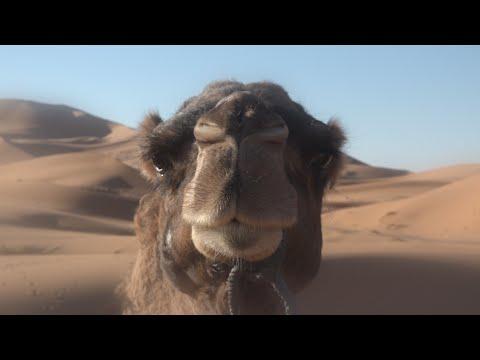 Adiós África · Viajar a Marruecos con 'Tour por Marruecos'