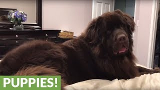 Could you sleep with a dog this big?