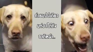ภาพสโลว์ที่น่าจดจำ ฮากว่านี้หาไม่ง่าย... #รวมคลิปฮาพากย์ไทย