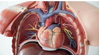 prevenir y curar angina de pecho cientficamente comprobado   pr 68
