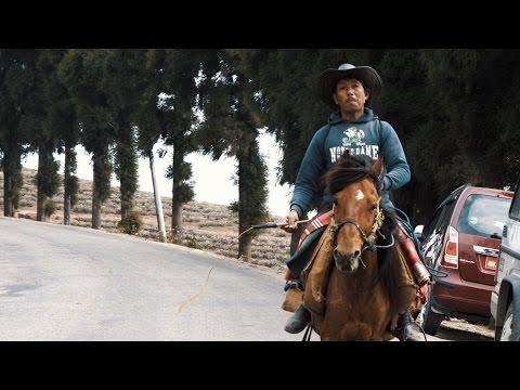 TEA GARDENS AND HORSES - KANYAM, PHIKKAL, ILAAM VISIT