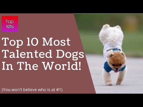 Top 10 Most Talented Dog Breeds in the World