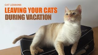 What to do for Your Cats Before Going on Vacation