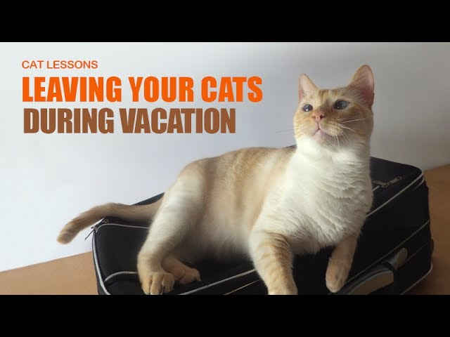 What To Do For Your Cats Before Going On Vacation Youtube