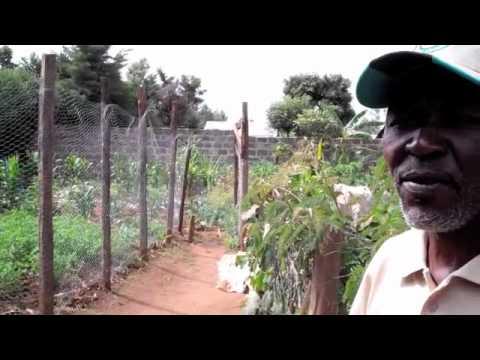 iCow Farmer Field School Visit