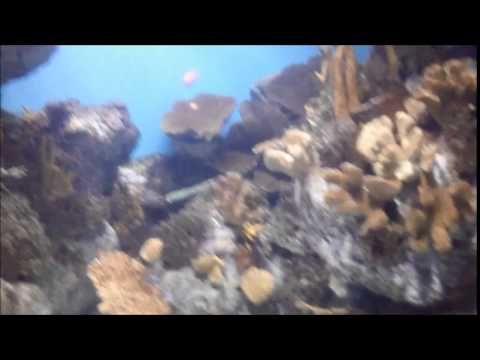 Relax music with marine aquarium fish in Bacelona, Spain