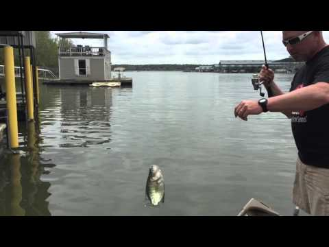 Go Go Minnow tail action = More Crappie! - YouTube