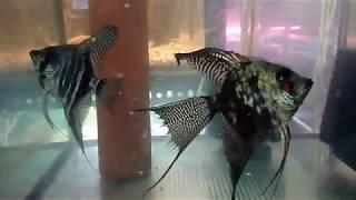 38. Wizyta w hodowli rybek.