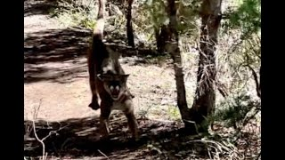 First interview with Utah man who was chased by a mountain lion