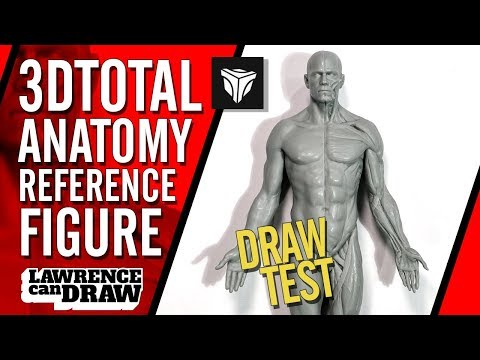 3dtotal Anatomy Figure Review for Digital Artists - YouTube
